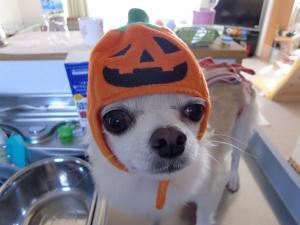 チロかぼちゃ