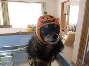 クロムかぼちゃ