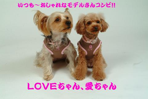 愛、LOVE