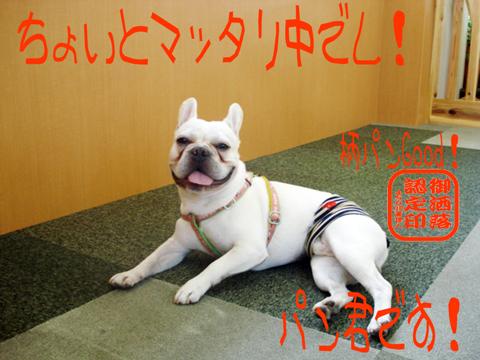 \(*^▽^*)ノ ハーーイ