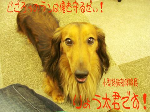 (・0・*)ホ,(゜0゜*)ホ--ッッ!!!