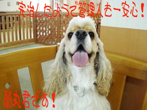 ハァーイ!L(´▽`L )