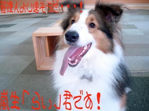 ε=ε=ε=ε=ε=(o゜ー゜)oブーン!!