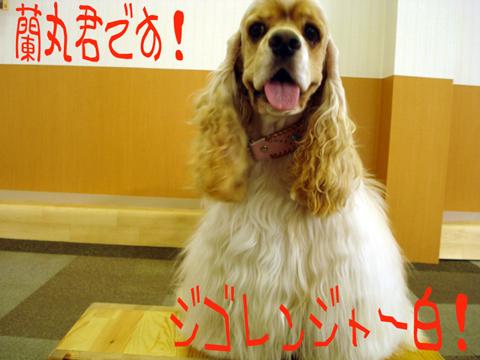 ★\( ̄▽ ̄ )/クル\(   )/クル\(  ̄▽ ̄)/★バンザーイ!!