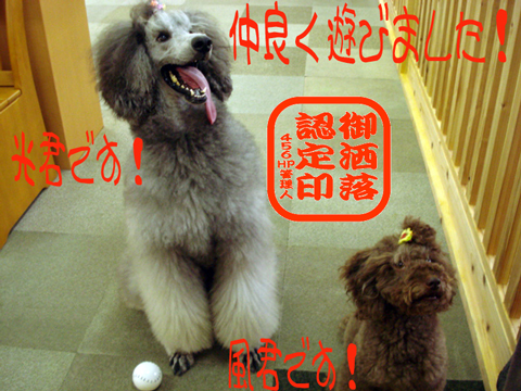♪⌒ヽ(*゚ω゚)ノ ヤッターッ!!