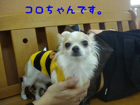 DSC03603.jpg
