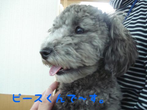 DSC03722.jpg