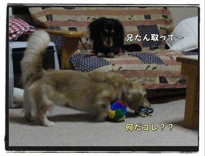 2009091001.jpg