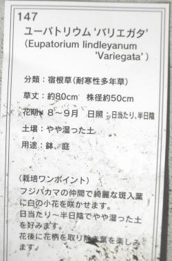 PA160006.jpg