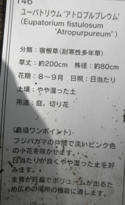 PA160025.jpg