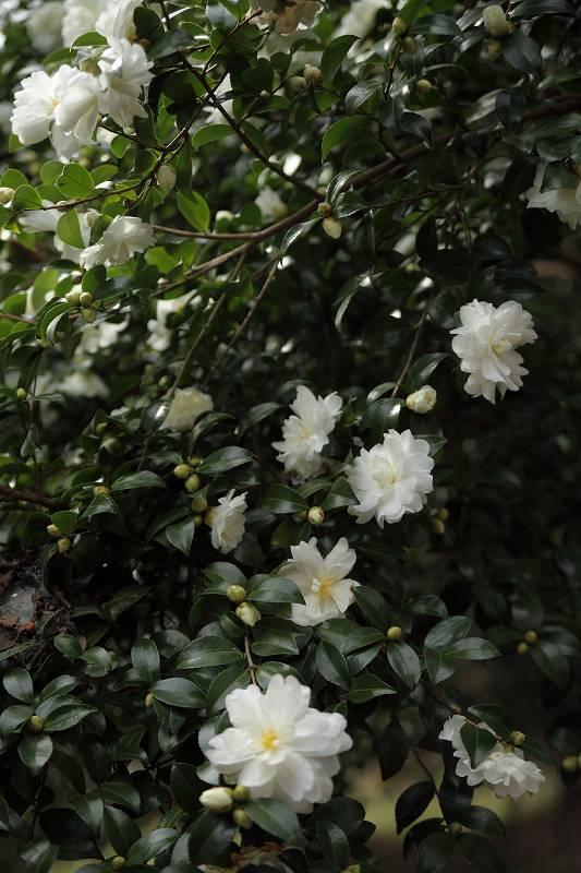 桜山_7753