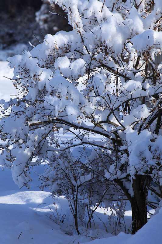 降雪_1214