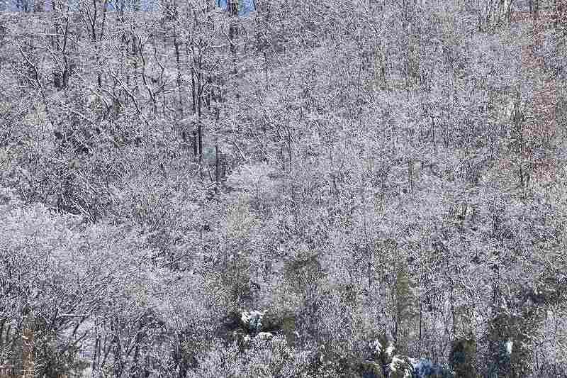 降雪_1207