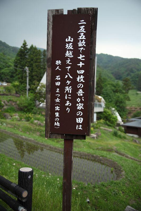 たんぼ_8355