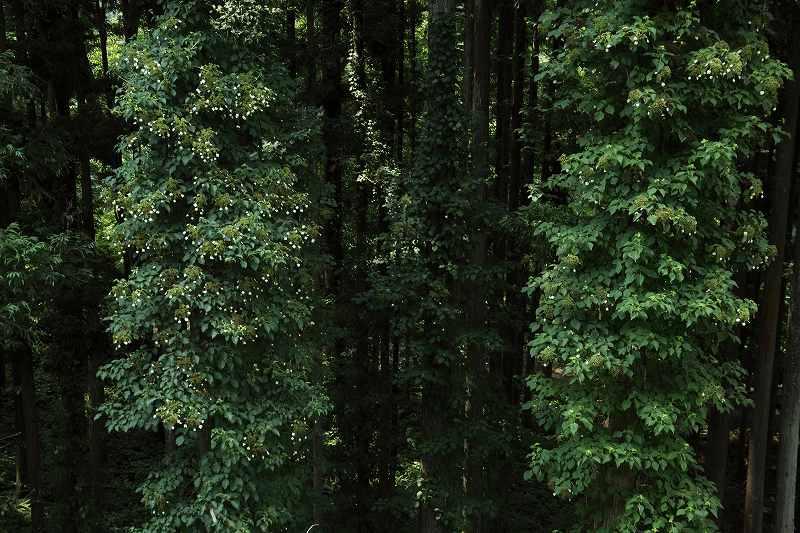 樹木_8564