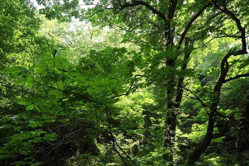 樹木_8581