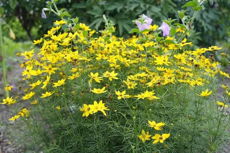 わが家の花たち_0112