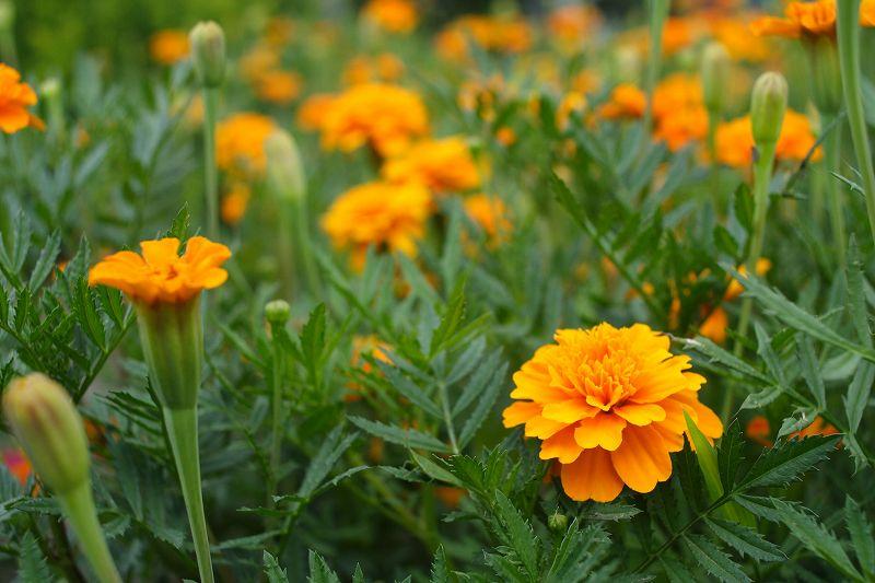 わが家の花たち_0109