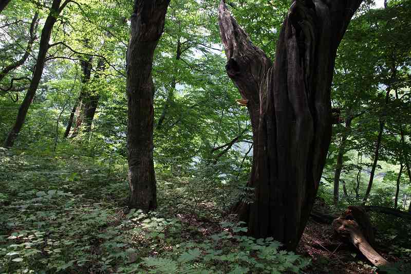 枯れ木_8722