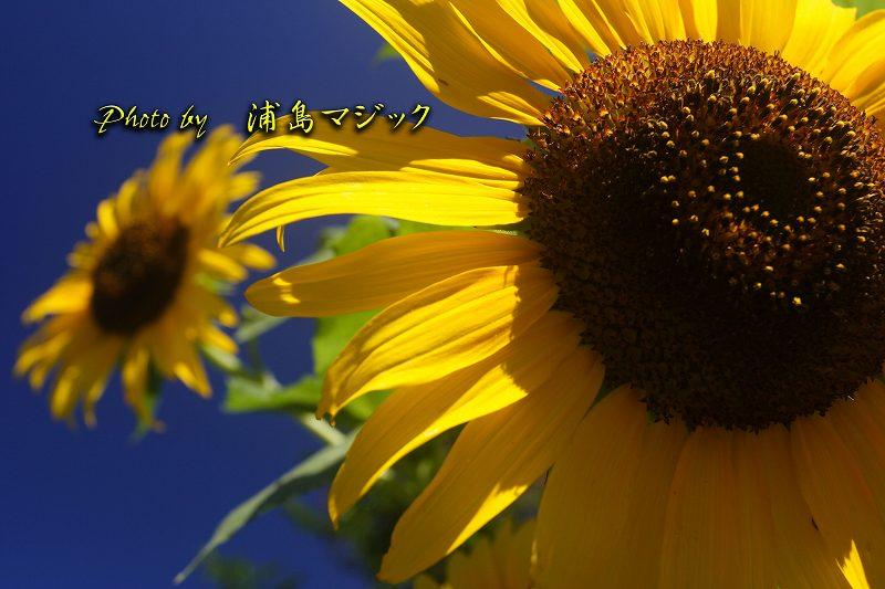 himawa.jpg