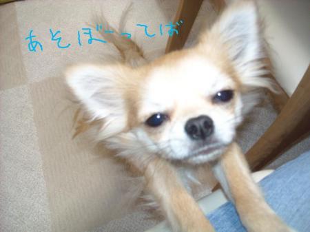 002_convert_20091227145408.jpg