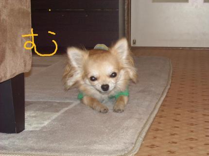 004_convert_20100115133257.jpg