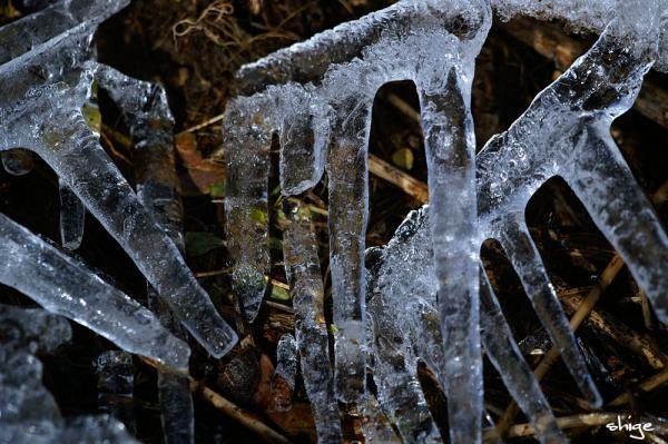 2009 02 01 樹氷祭り 041
