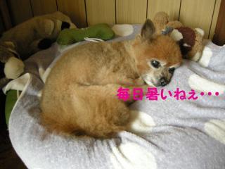20110820若ちゃん1