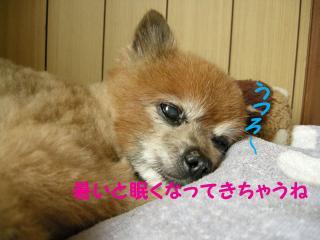 20110820若ちゃん2