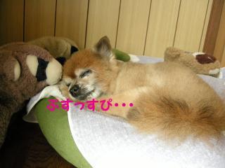 20110820若ちゃん4