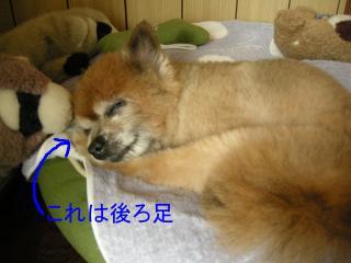 20110820若ちゃん5