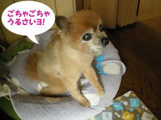 20110820若ちゃん6