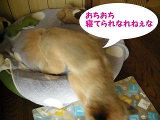 20110820若ちゃん7