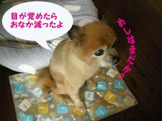 20110820若ちゃん9