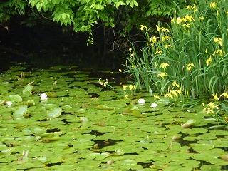 賀茂神社池