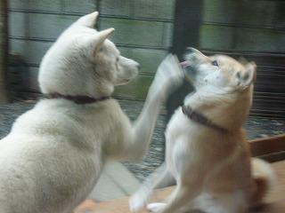mone喧嘩