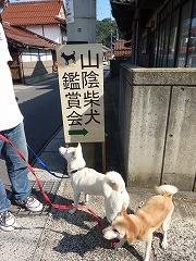 2011山陰柴犬鑑賞会