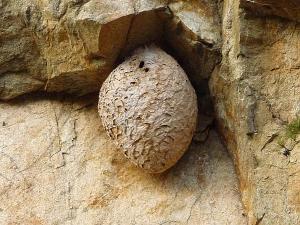 布引の滝_すずめばちの巣2