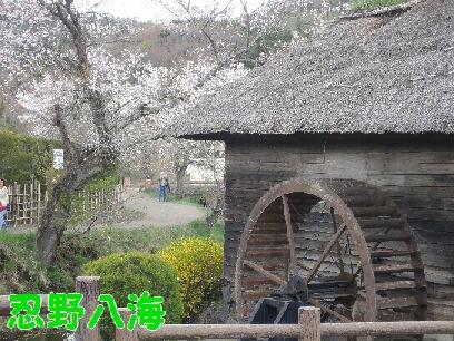山中湖 030