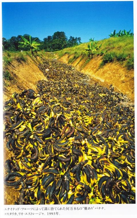 畑廃棄 バナナ.jpg