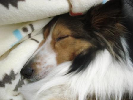 sleeping jodie