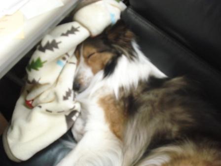 sleeping jodie II