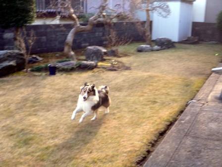 Jodie run