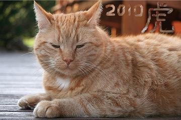 tiger_2010.jpg