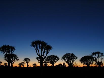 アフリカの朝
