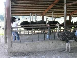 ダチョウ牧場?