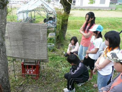 日本ミツバチ見学