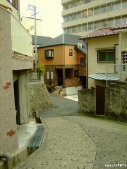 shinkaichi05b.jpg