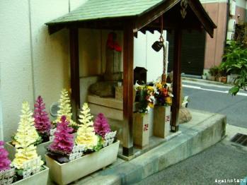 shinkaichi09c.jpg
