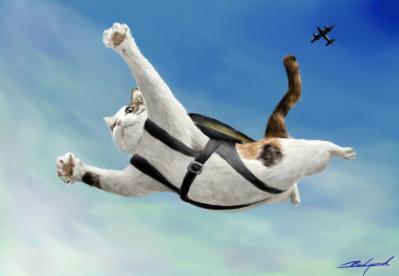 スカイダイビング猫